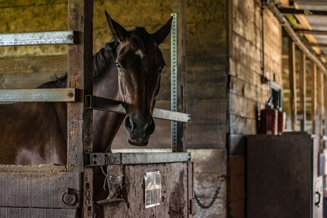 Asheville Equestrian Communities