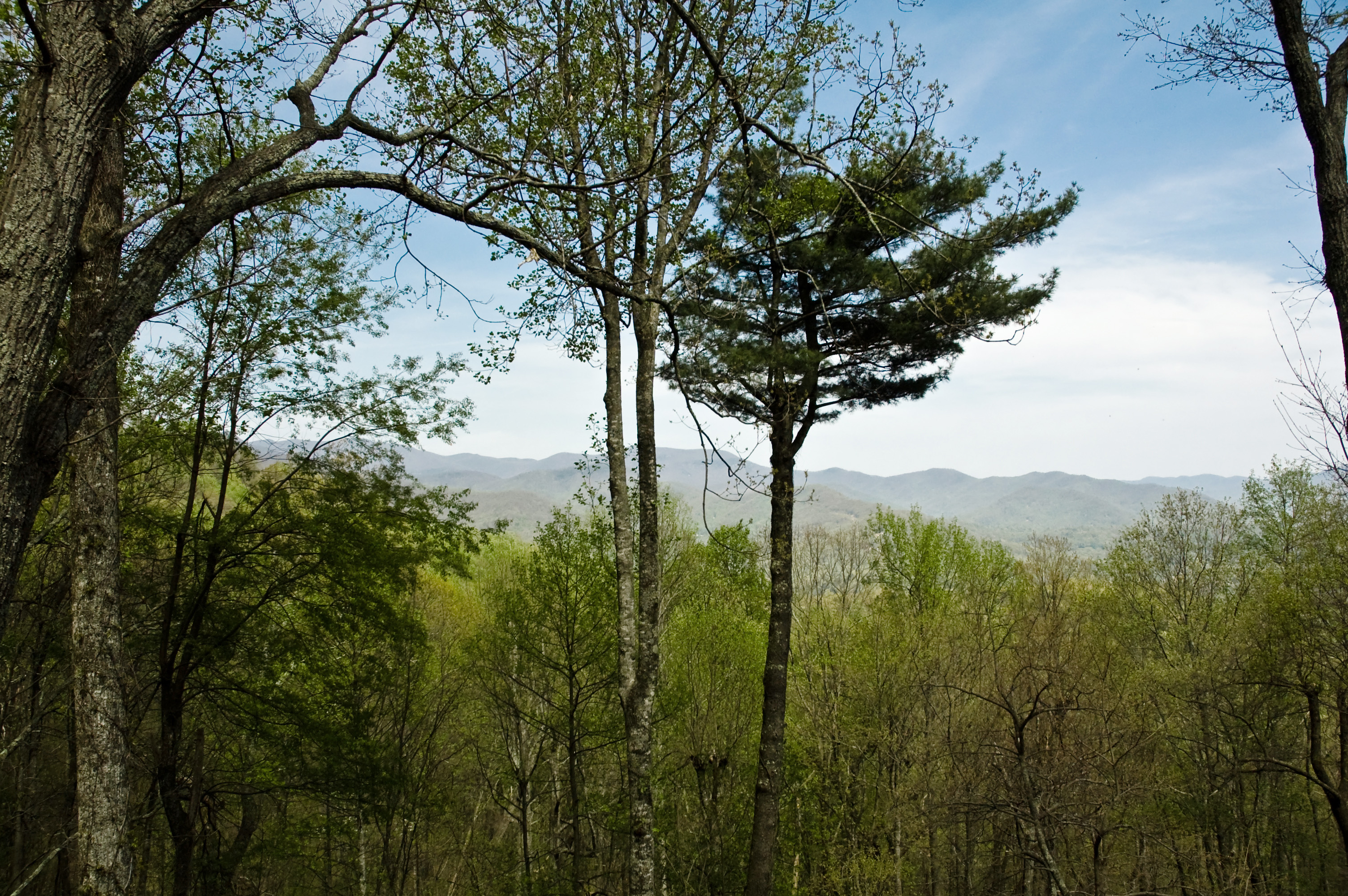 Eastern Views from Town Mountain, Asheville, NC