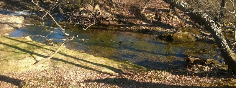 Flat Creek along Mountainbrook Village