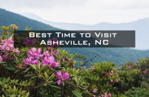 "Rhododendrons in bloom with ""Best Time to Visit Asheville, NC"" overlaid on the image"
